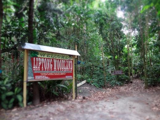 liptong-woodland-01