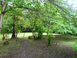 liptong-woodland-06